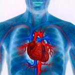 What Are the Different Types of Cardiovascular Diseases?