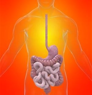 Digestive System Disorders Can Cause Serious Problems