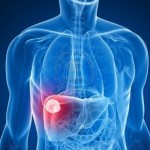 common liver function tests